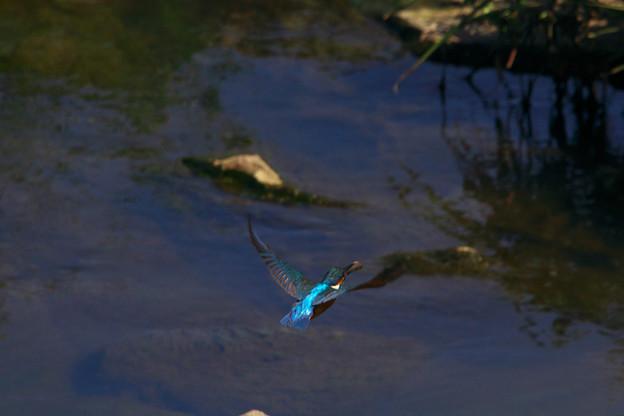 写真: 魚運ぶ