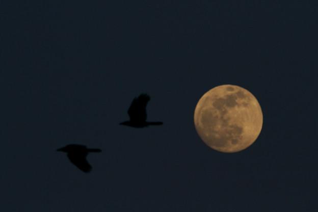 月とカラス