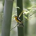 Photos: 竹林の狩