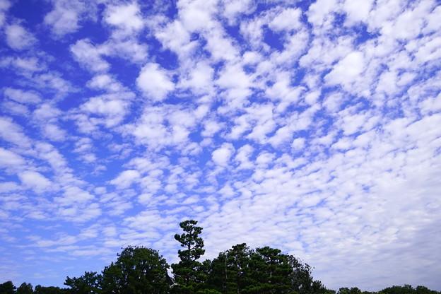 Photos: 松の島と秋の空