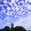 松の島と秋の空