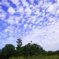 Photos: アオサギ小といわし雲