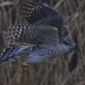 Photos: 冬の翼