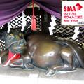 Photos: 露天神社(お初天神)・撫で牛