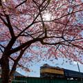 Photos: 大井川鐵道 大和田~家山