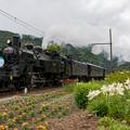 Photos: 大井川鐵道 青部~崎平