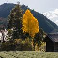 Photos: 大井川鐵道 田野口~駿河徳山