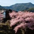 Photos: 大井川鐵道 川根温泉笹間渡~抜里