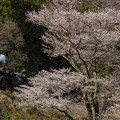 Photos: 大井川鐵道 地名~川根温泉笹間渡