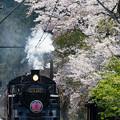 Photos: 大井川鐵道 田野口