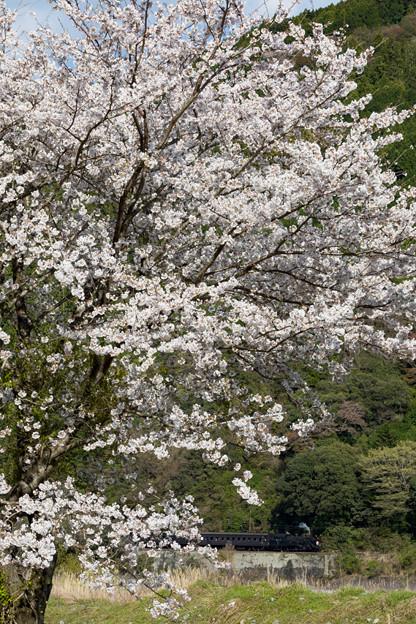 大井川鐵道 田野口~下泉