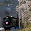 Photos: 大井川鐵道 家山~大和田