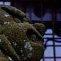 顕宗仁賢神社の狛犬