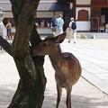 写真: 永遠と鹿