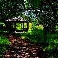 写真: 新緑の暮らし