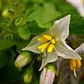 写真: 野菜の花…?