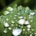 雨の日の贈り物☆