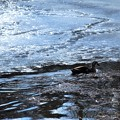 写真: 氷の中を
