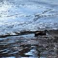 Photos: 氷の中を