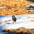 写真: 雪と遊ぶ