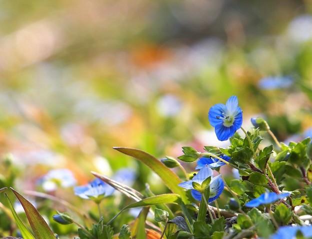 春色ブルー