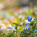 写真: 春色ブルー