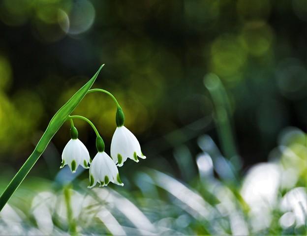 写真: 春の輝き