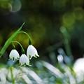 Photos: 春の輝き