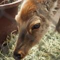 Photos: 鹿