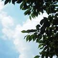 写真: 新緑と雲