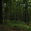 Photos: 森と歩道