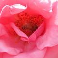 薔薇の部屋