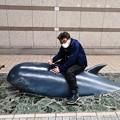 Photos: 夜の高知 クジラに乗った