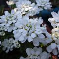 庭の花満開