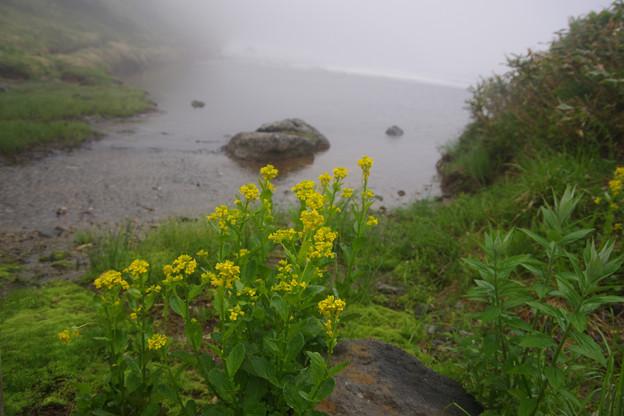 みどりが池の花々