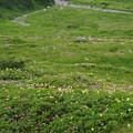 Photos: 立山の花々