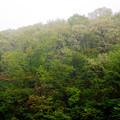 ひと雨ごとに緑が増える