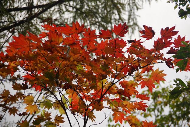 天生峠の紅葉