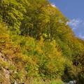 有峰林道は、紅葉まっさかり