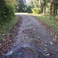 Photos: 落ち葉は滑るぞ