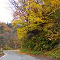 大長谷は、紅葉まっさかり
