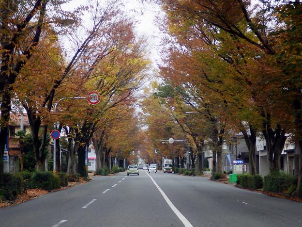 富山市内の紅葉見ごろ