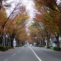 写真: 富山市内の紅葉見ごろ
