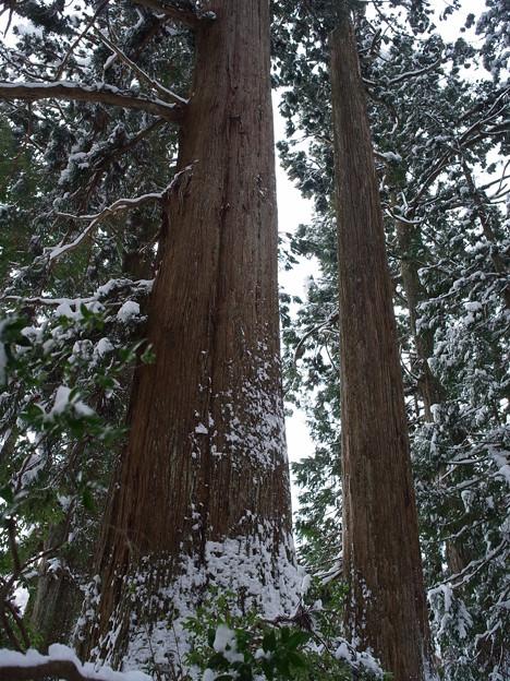 神聖な場所には巨木が多い