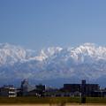 積雪の無い富山