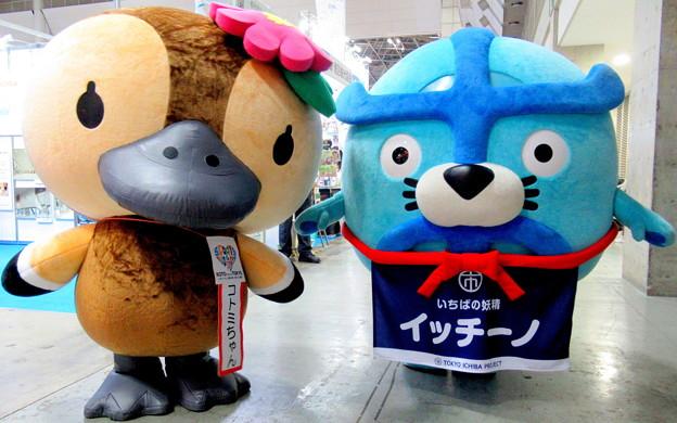 コトミちゃん と イッチーノ