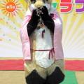 Photos: きゃらコレ13・咲鶴