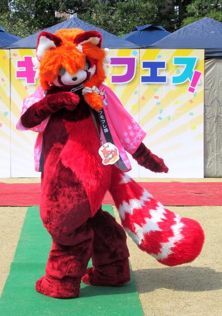 Photos: きゃらコレ17・マヨリカ