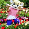 Photos: イチバ と 春のひととき