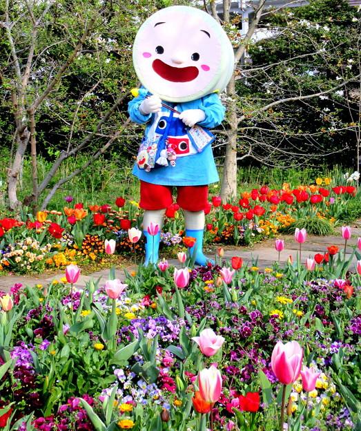 ごかぼちゃん と 春のひととき